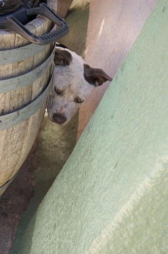 Hi Pup!