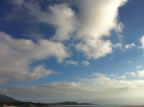 beach_kites